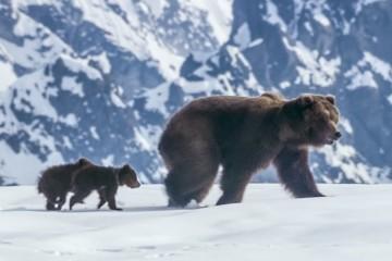 Bears_Grab_b5_A