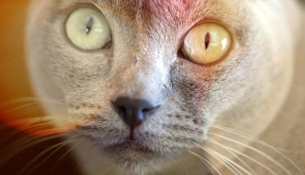 <b>Short Stuff</b>: Watch Jason Willis's Mind Bending, Sundance Award Winning <i>Catnip: Egress to Oblivion</i>