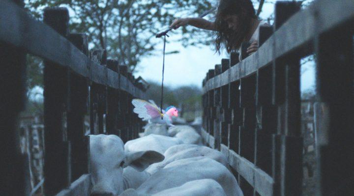 Transilvania International Film Festival: A Rising Star